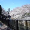 【サイクリングコース3】 桜満開の石神井川サイクリング🌸(都立城北中央公園〜王子)  【ランチ】Tokyo Guest House PIZZA houseのピザ