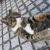 10月後半の #ねこ #cat #猫 その3