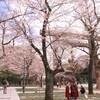 靖国神社・千鳥ヶ淵周辺の桜情報