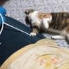 猫のシャンプーはどうしたら一番良い?