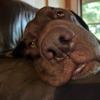 うちのポンコツ犬。#5
