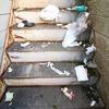 ゴミ 設置場所 ネット