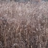 飛騨の冬景色 【猪臥山から見える雲海】 vol 1