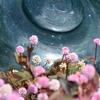 立春やまん丸花と猫の園 ココアやチャイはいかがでしょう