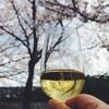 お花見ワイン会