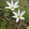 「時間」のお話③~一瞬の花火、大輪の花~「法の水茎」87