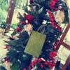クリスマスは、いつもとちょっと違う雰囲気に包まれたい♡(新潟市おすすめスポット)