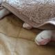 今日の黒猫モモ&白黒猫ナナの動画ー854