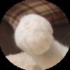 プレート除去・オトガイ形成手術②【手術当日〜※ブルテリア的腫れ方】
