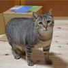 Holistic RECIPE(猫用)は小分けになってて便利だけど慣れるまで食いつきが。。。