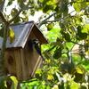 四十雀の営巣