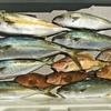 久しぶりの…まじめジギング&根魚狙い❗ 【 ヒラマサまわってます / 日本海ジギング 】