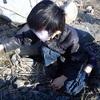 ランダイ杉の葉の化石発掘