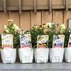 4-205   愛すべき花たち〜令和初、冬のプランター準備〜
