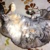 猫の無防備な姿は癒されるぅ~~~♪
