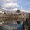 城と桜 🏯🌸