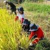 稲刈り&芋掘り