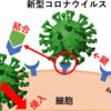 免疫 vs 新型コロナウイルス