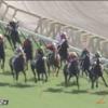 土曜日の東京競馬場の傾向分析。毎日王冠はこの馬から。