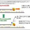 【医学部編入】生命科学講義・DNAの複製① ~DNAポリメラーゼ~