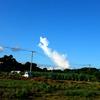 【変わらぬ喜界島の美しさ】変わる長命草(ボタンボウフウ)のおいしい食べ方