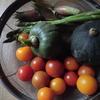 庭とまと収穫と畑のカボチャ終了