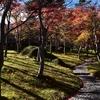 秋の箱根 紅葉の赤と苔の緑を楽しめる箱根美術館の苔庭を散策(Hakone museum of art)