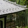 長谷寺の竹林