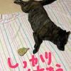 番外編;ネェネ、救急搬送されるゥッの巻〜(ꐦ ´͈ ᗨ `͈ ) '`,、ワラエナイヨ