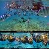 お魚天国の海