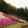 姫路市の芝桜 〜 宍粟市の千年藤を楽しみに行ってきました。
