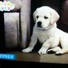 もふもふモフモフ#8-2 「介助犬シンシア」