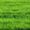 草を刈りたい