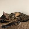 在宅勤務時の猫の姿