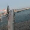日本鋼管のJFE突堤は簡単にハマチが釣れました!