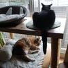 猫よりも今日は人(女性ならではの話)が主役。