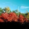 紅葉の立山黒部アルペンルートはまさに絶景だった!①【富山:大観峰・黒部平・黒部ダム】