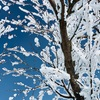 2月1日 冬の赤城山 樹氷がきれいだった