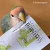 阪神百貨店『心うるおう小鳥ガーデン』もう21日から