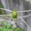 寒いけど春近し