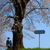 平成最後の福井市足羽川桜並木のお花見