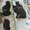 猫を飼うと決めた日2ー苦戦する新たな猫探しー