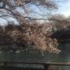 夏韻集首都歌会とお花見に参加しました。
