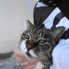12月後半の #ねこ #cat #猫 その4