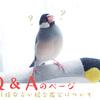 【Q&A】mikata.の四柱推命占い総合鑑定について