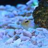 久しぶりに一眼レフカメラで撮ってみる海水魚たち