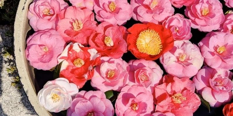 春だけの特別がいっぱい!「霊鑑寺 春の特別公開」に行くべき理由って?
