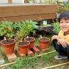 小さな苗木 鉢植え