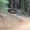 【ヨセミテ】超過酷な坂と熊に遭遇したハイキング【二日目】