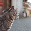 今まで出会った野良猫たち🐈